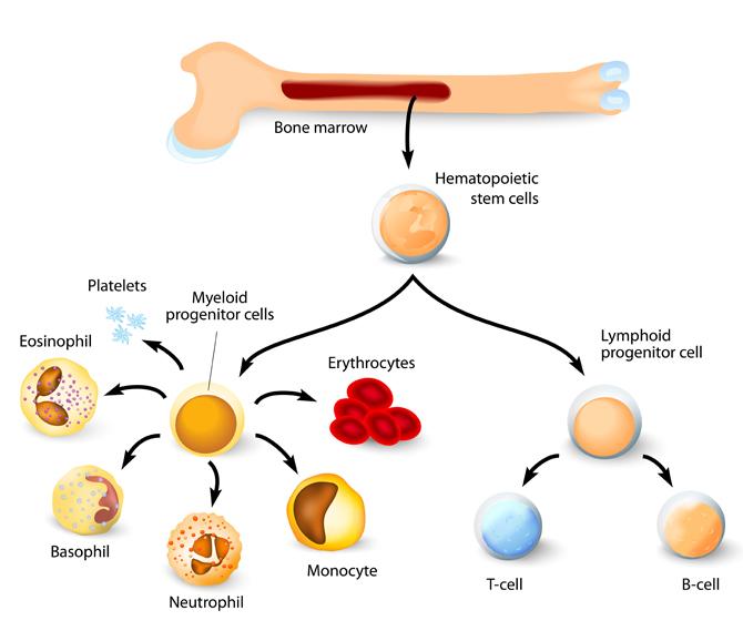 stem-cell-infograph